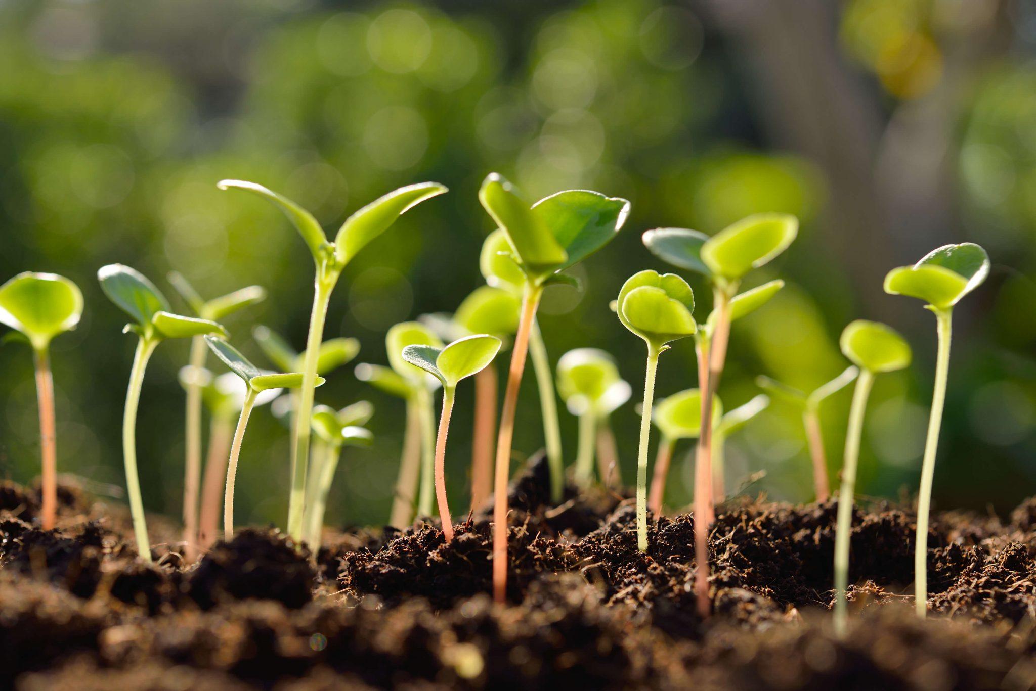 Sejanje in vzgoja lastnih sadik