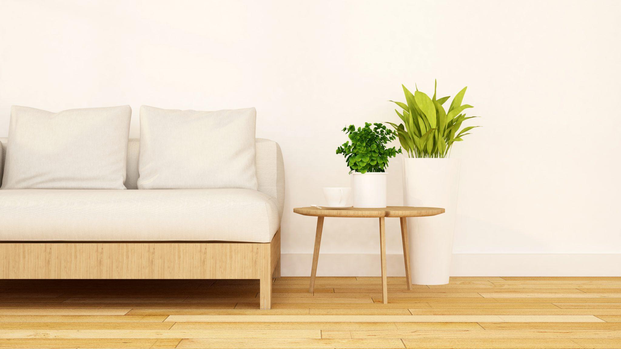 Pflanzen, die die Luft reinigen und die Raumenergie verbessern