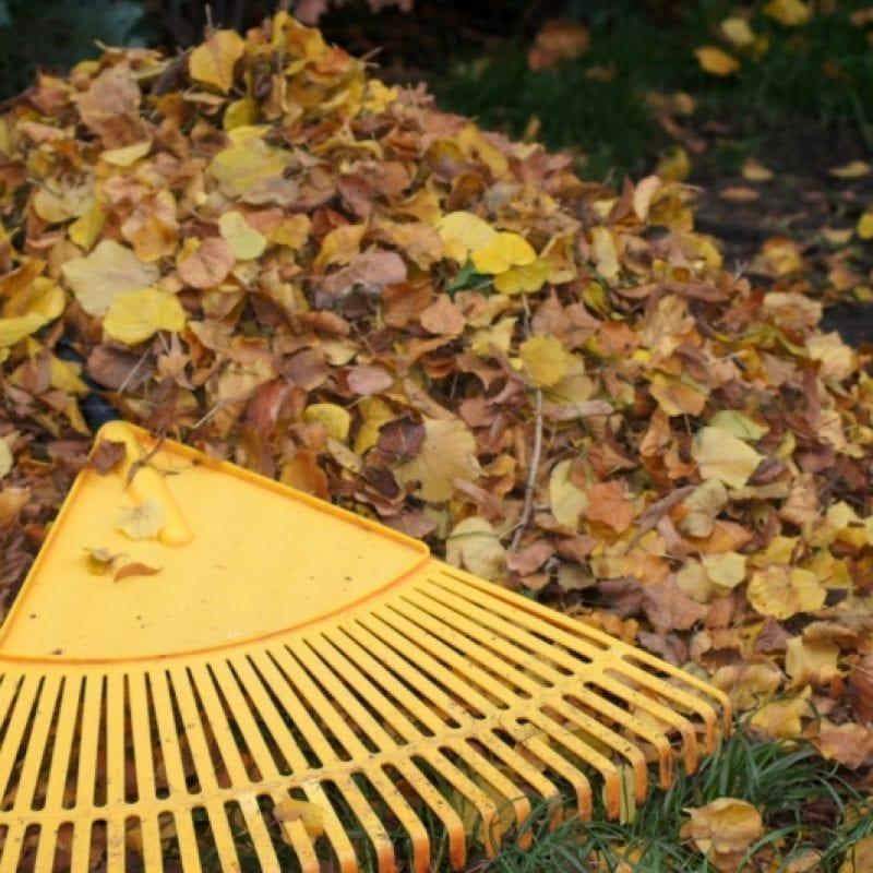 zaščita vrta pred zimo listje