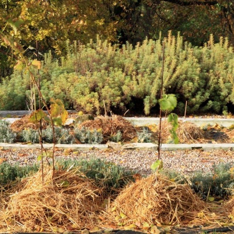 zaščita vrta pred zimo