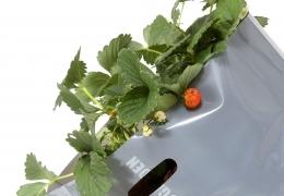 Urbani organski vrt v sadilni vreči