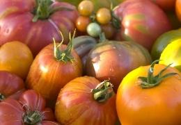 Zgodba o organskem paradižniku…
