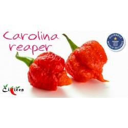 carolina-reaper-homeogarden