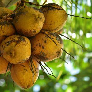 kokosova-zastirka-homeogarden-1