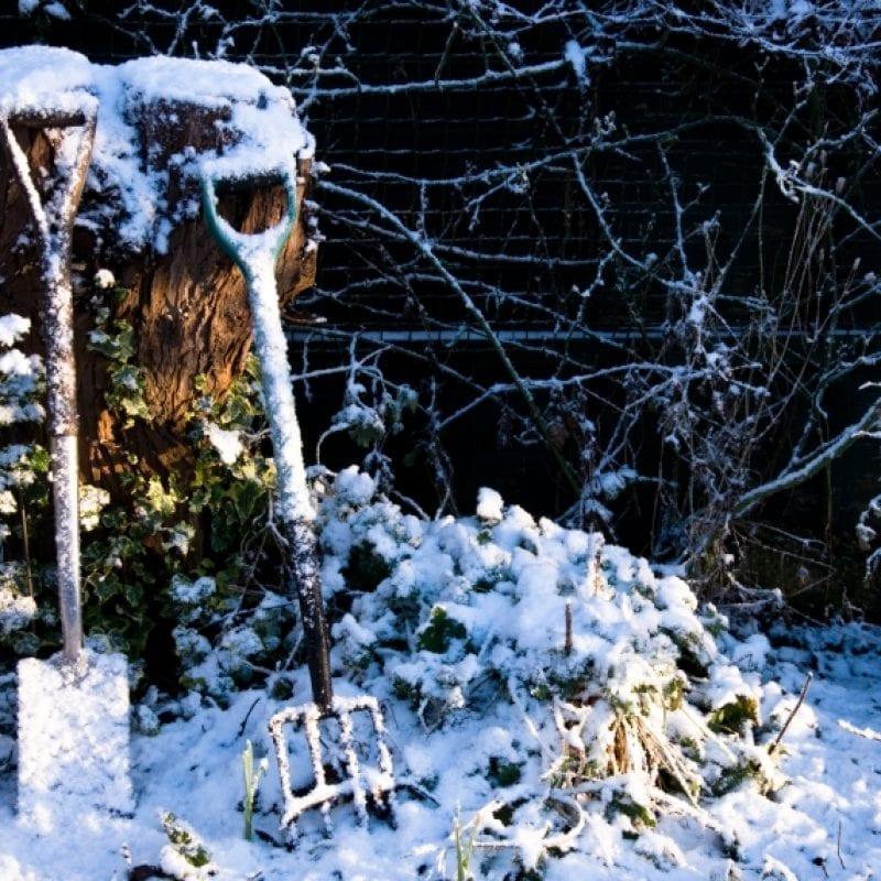 kako zaščititi rastline pred mrazom