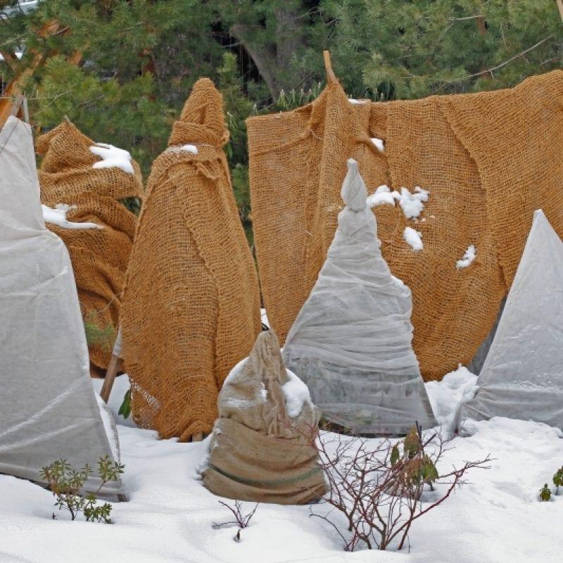 zaščita rastlin pred mrazom