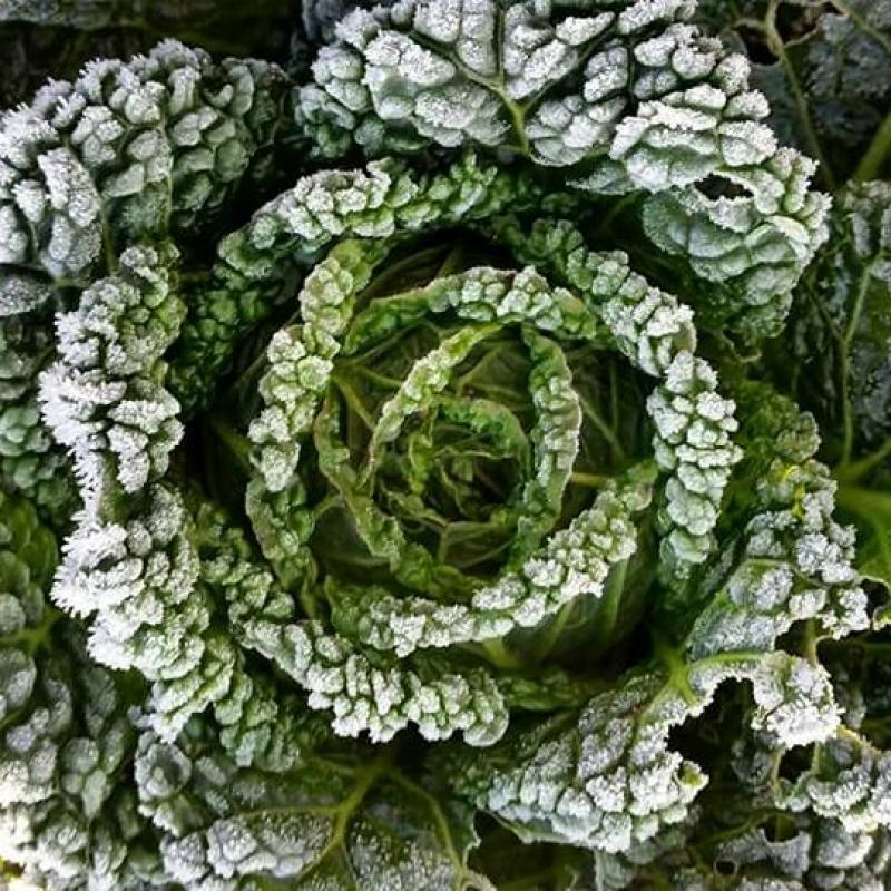 zaita-rastlin-pred-mrazom-cover